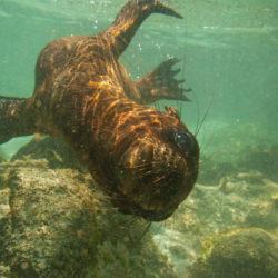 Galapagos Ecuador seal photo tour Cathy and Gordon Illg