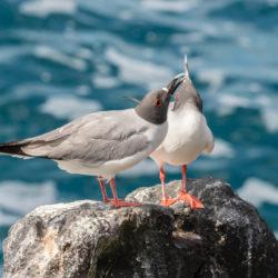 Galapagos Ecuador photo tour Cathy and Gordon Illg