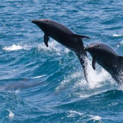 Galapagos Ecuador dolphins photo tour Cathy and Gordon Illg