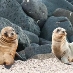 Sea Lions Galapagos Islands Photo Tour Cathy & Gordon Illg