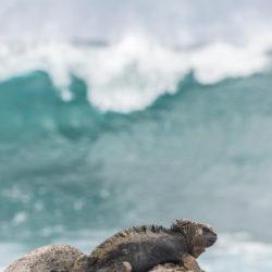 Galapagos Ecuador iguana waves photo tour Cathy and Gordon Illg
