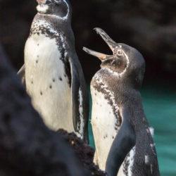 Ecuador penquins photo tour Cathy and Gordon Illg