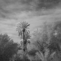 Palm oasis Morocco photo tour Ron Rosenstock