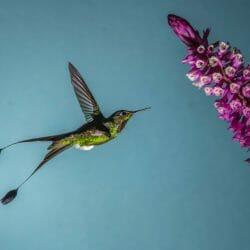 Ecuador Hummingbird photo tour Kathy Adams Clark