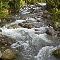 Savegre River, Tamalanca Mountain, Costa Rica Kathy Adams Clark