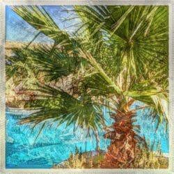 Palm Morocco photo tour Karen Schulman