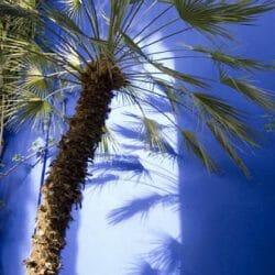 Palm tree Marrakech Morocco photo tour Karen Schulman