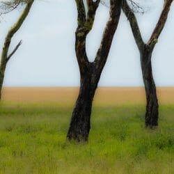 Tanzania Photo Tour Tom & Cree Bol