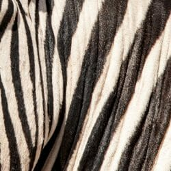 Namibia Zebra photo tour Wendy Kaveney