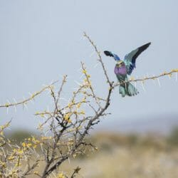 Namibia photo tour Brenda Tharp