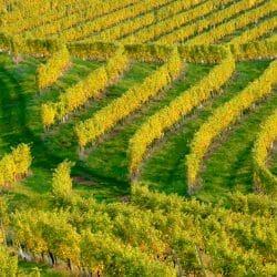 Winery Jeruzalem Slovenia photo tour JB Steedle