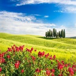 Italy Tuscany hillside photo tour Charles Needle