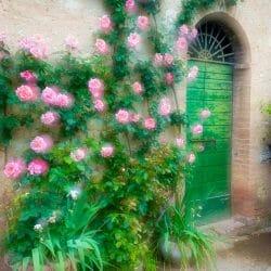 Tuscany flower door photo tour Charles Needle