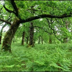 Sheefrey Woods County Mayo Ireland photo tour Karen Gordon Schulman