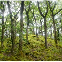 Sheeffrey Wood Ireland Ron Rosenstock photo tour