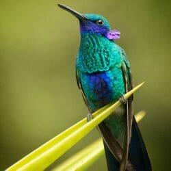 Hummingbird, Nono Ecuador photo tour Karen Schulman