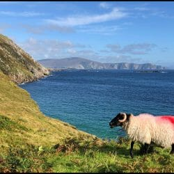 Achill Island Ireland sheep photo tour Karen Schulman