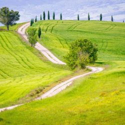 Tuscany Italy hillside cypress trees photo tour Charles Needle