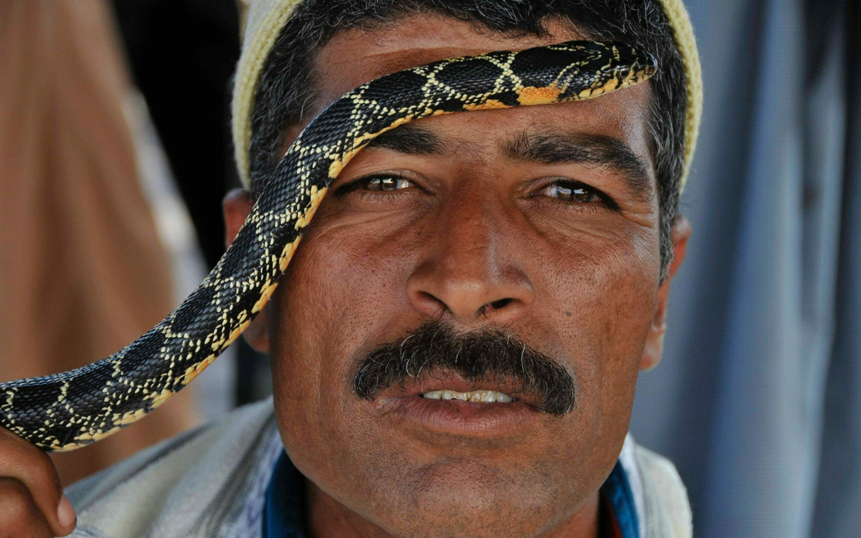 Morroco snake charmer photo tour Terri Gross