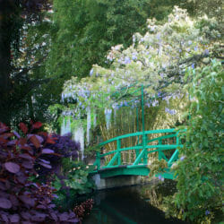Giverny bridge wisteria photo tour Nancy Ori