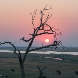 Chobe Park Botswana photo tour Brenda Tharp