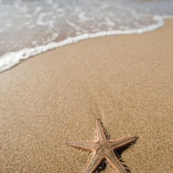 Baja and Sea of Cortez Mexico photo tour Tom Bol starfish