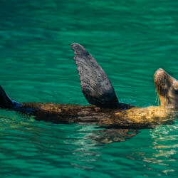 sea lion Baja and Sea of Cortez Mexico photo tour Tom Bol