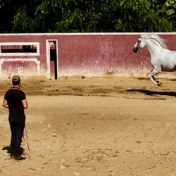 Portugal photo tour J Steedle Horse Training