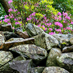 Rock Wall Rhododendron Lake District England UK photo tour R Buchbinder