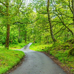 Forest Road Lake District England UK photo tour R Buchbinder