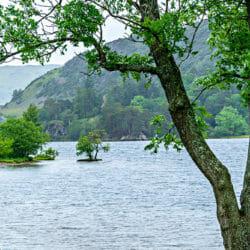 Tree Lake District England UK photo tour R Buchbinder