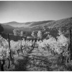 Tuscan Landscape Italy photo tour Ron Rosenstock