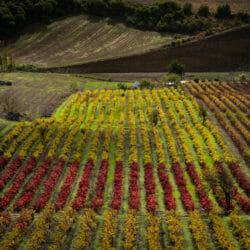 Vineyards Portugal photo tour Keron Psillas