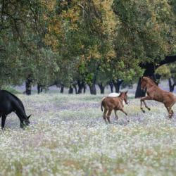 Lusitano Horses fields Portugal photo tour K Psillas