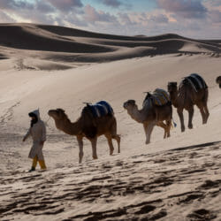 Morocco Sahara camels photo tour Betty Sederquist