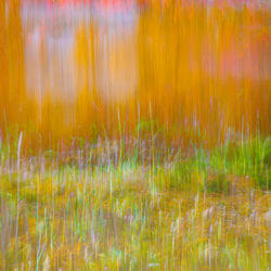Autumn color Lofoten islands Norway photo tour Kathy Adams Clark
