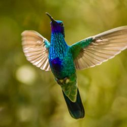 Ecuador hummingbird from Nono Ecuador Lorena Tapia de Morillo