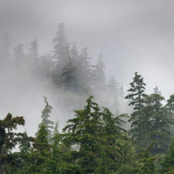 Sitka AK photo tour Betty Sederquist forest
