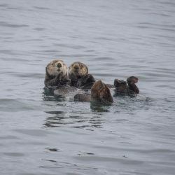 Sitka AK photo tour Betty Sederquist seals