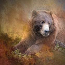 Sitka AK photo tour Betty Sederquist bear