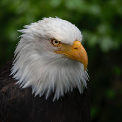 Sitka AK photo tour Betty Sederquist eagle