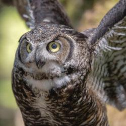Sitka AK photo tour Betty Sederquist owl