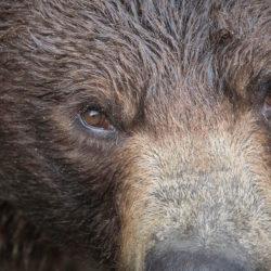 Sitka AK photo tour Betty Sederquist upclose bear