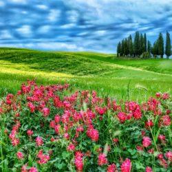 Val d'Orcia Tuscany Italy cypress trees Charles Needle photo tour